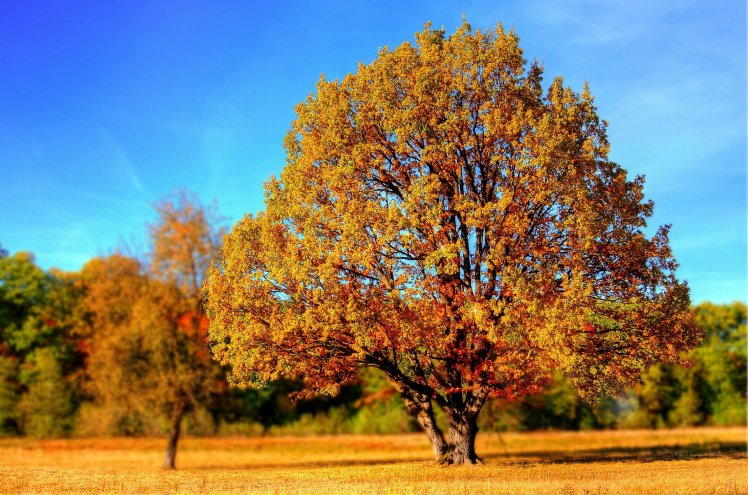 autumn summer tree wood gold